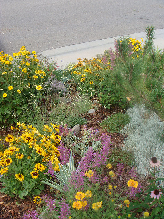 Fort collins landscape design landscape maintenance landscapers garden colorado flowers workwithnaturefo