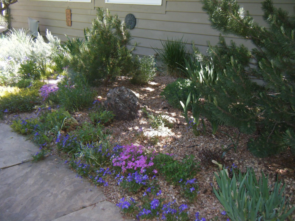 Landscape Garden Art : Fort collins landscape design maintenance